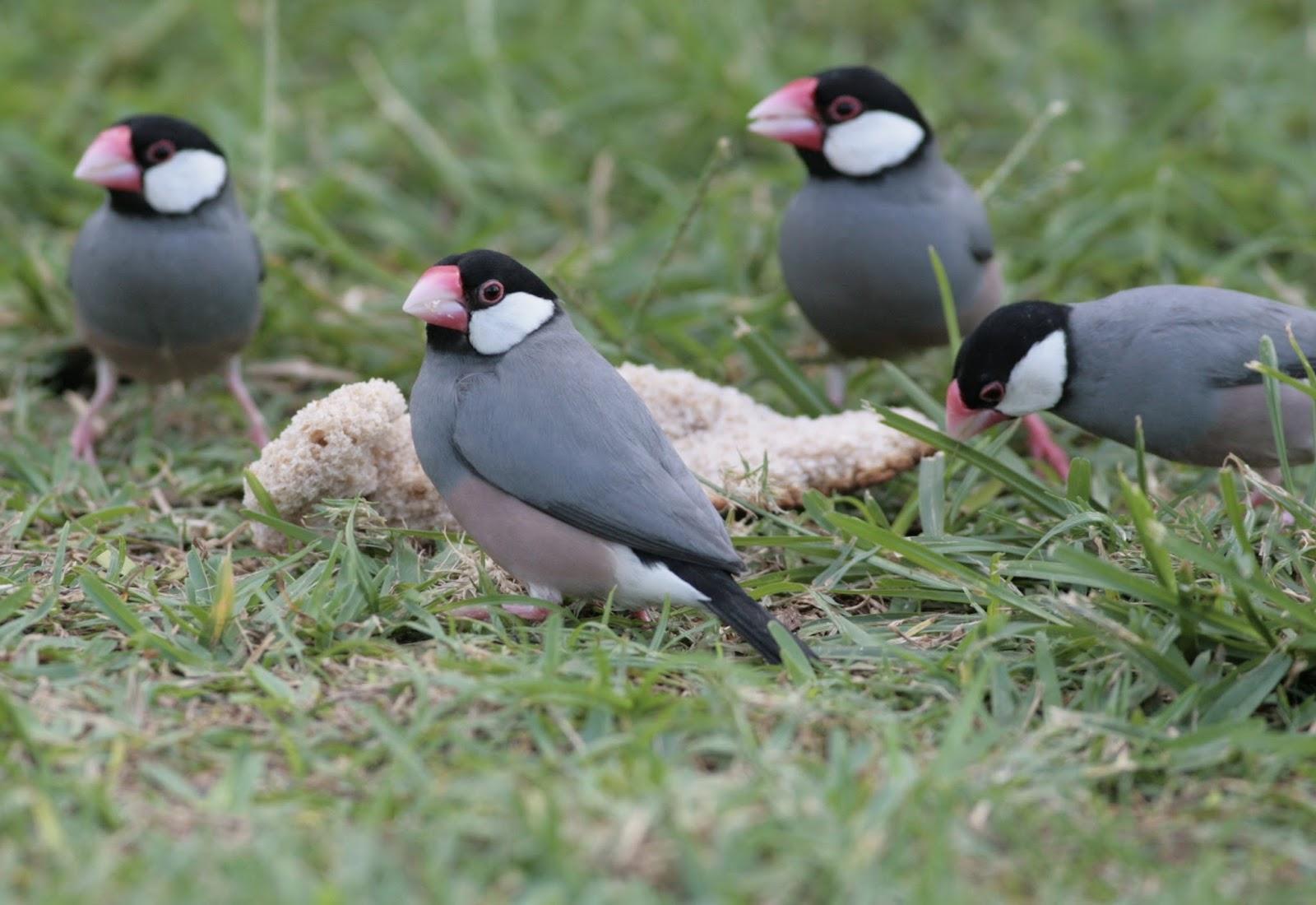 Hawaiian Birds And Wildlife Mega Photo