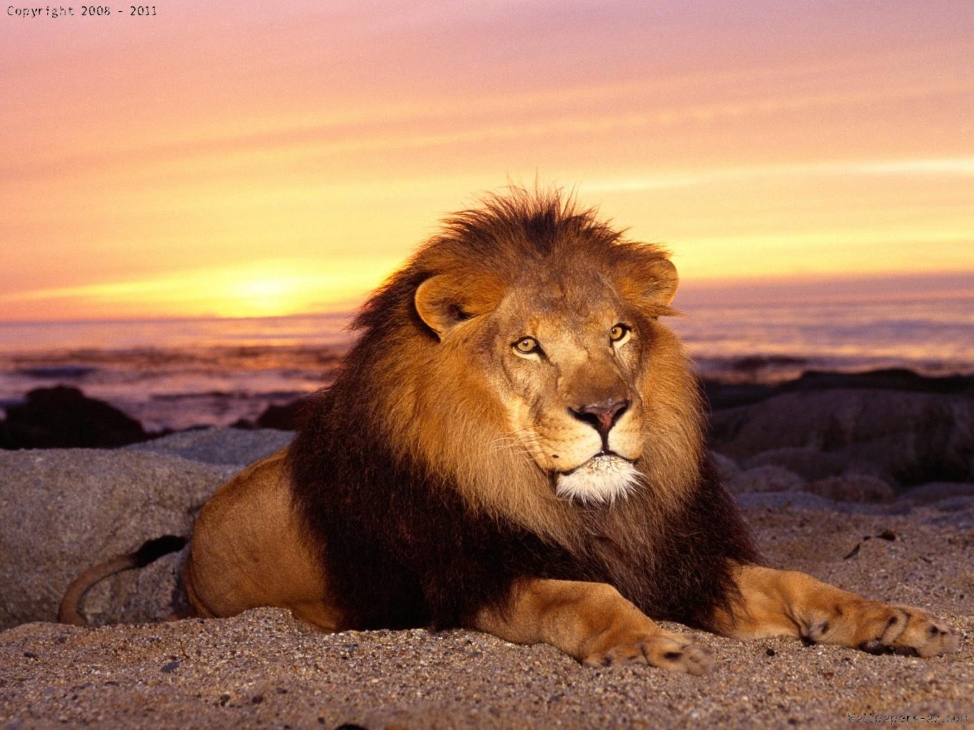 http://4.bp.blogspot.com/-WM_Bra2MMcg/TmuNG-ePmHI/AAAAAAAABu8/l9iKAbkR-kQ/s1600/lion%2Bsea.jpg