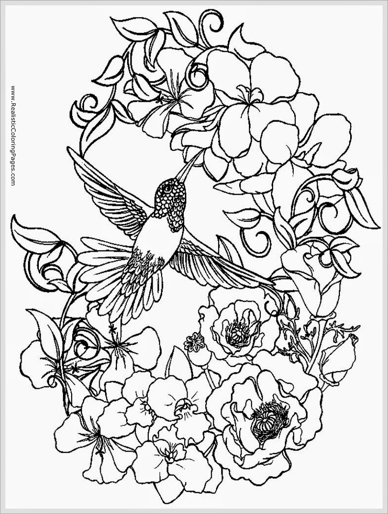 sparrows bird coloring pages for printable realistic