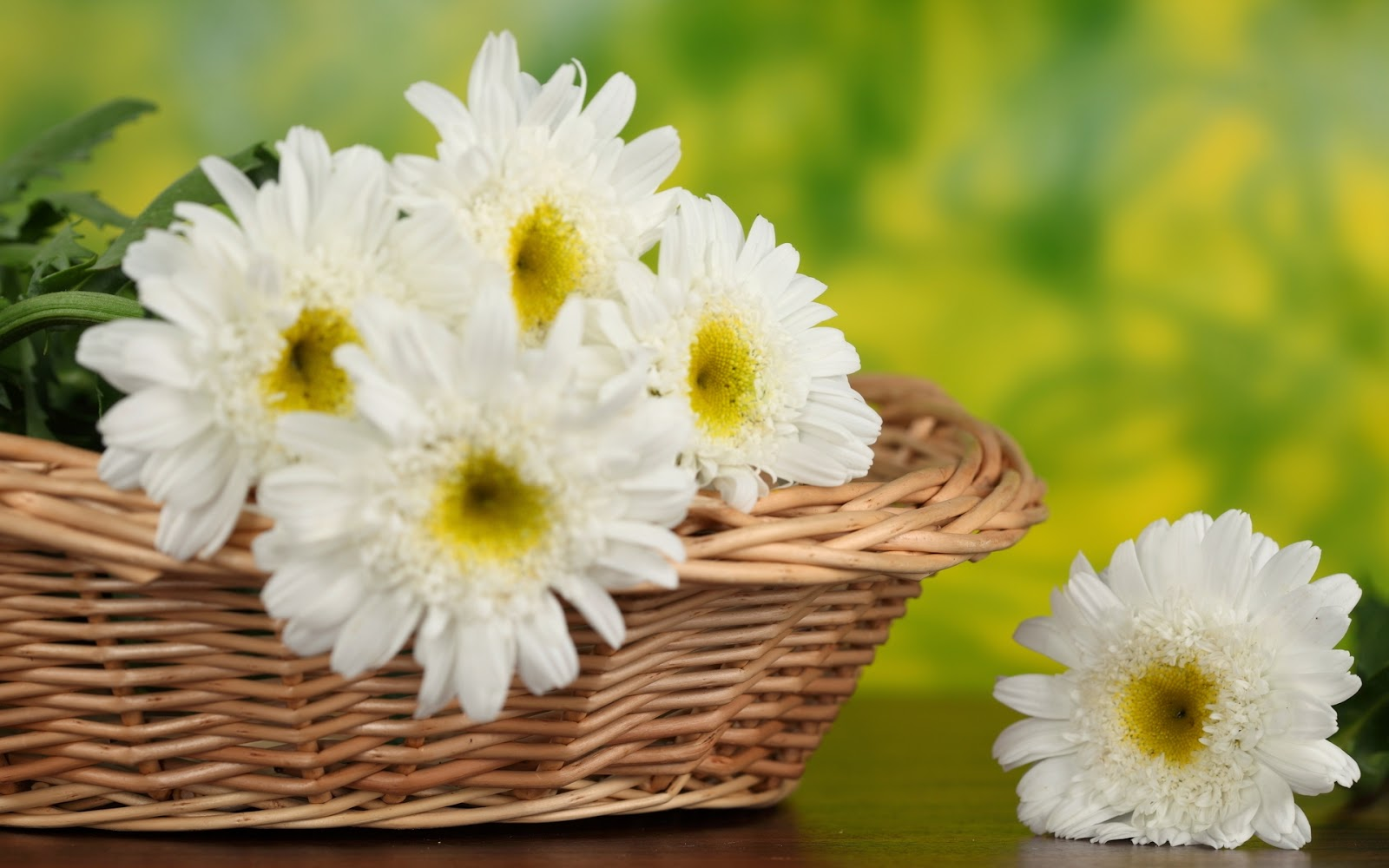 White gerbera daisy flower photography hd pictures wallpapers white daisy flower flowe bouquet basket pictureg izmirmasajfo