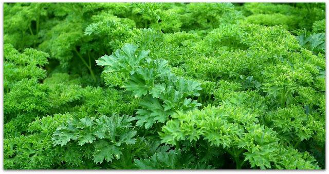 plantas-para-reducir-manchas-en-la-piel
