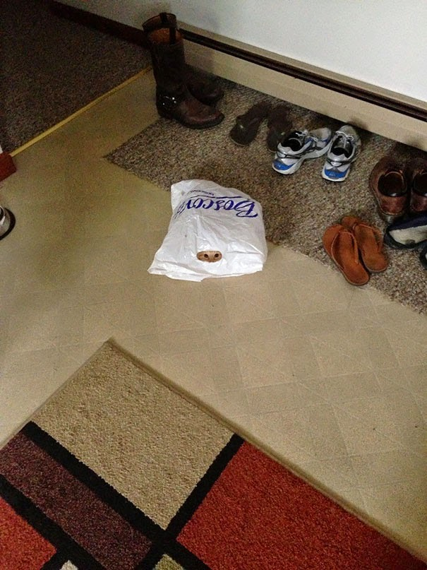 cats who mastered the art of hid and seek-10