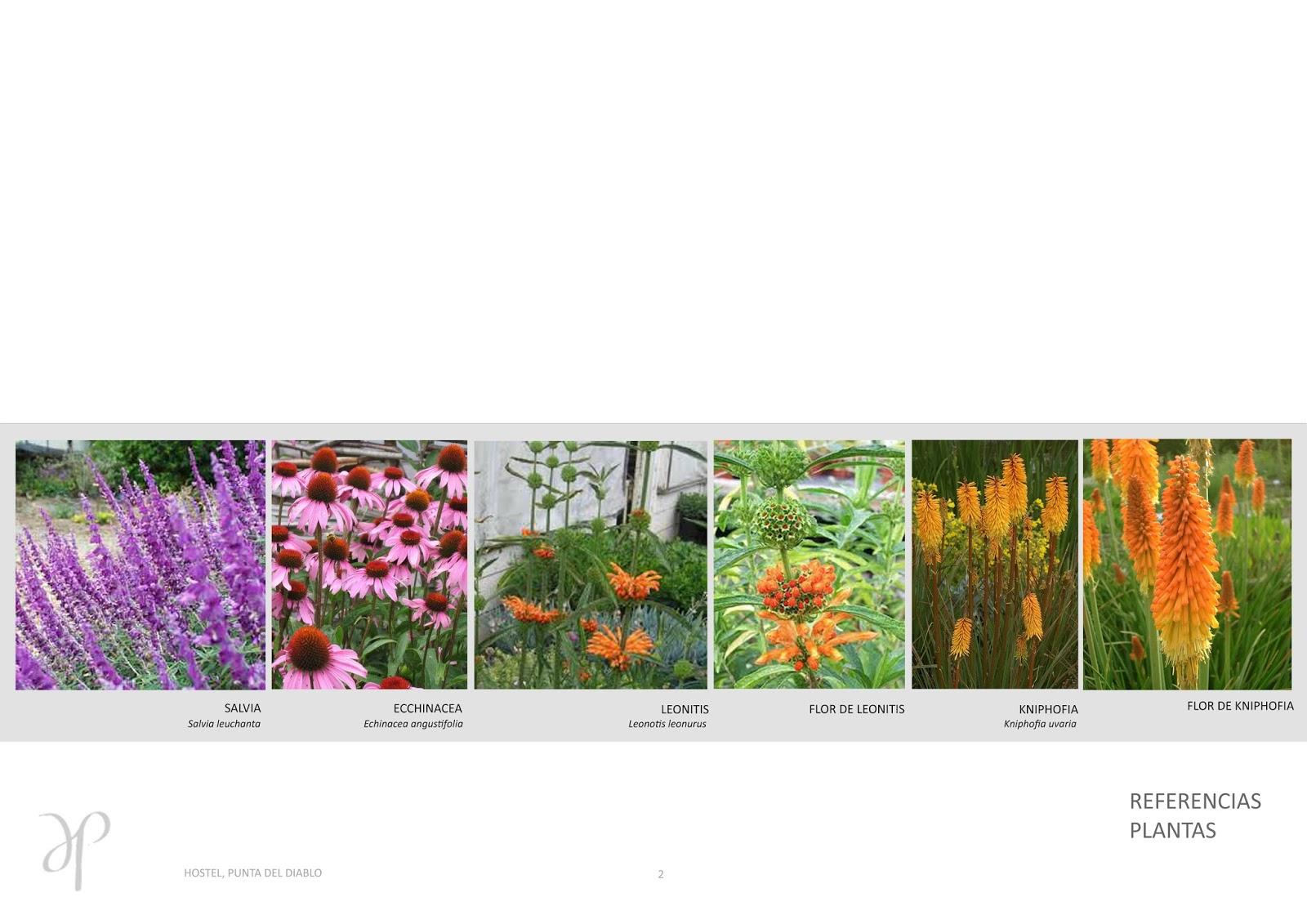 Estudio de paisajismo y arquitectura locales comerciales for Plantas paisajismo