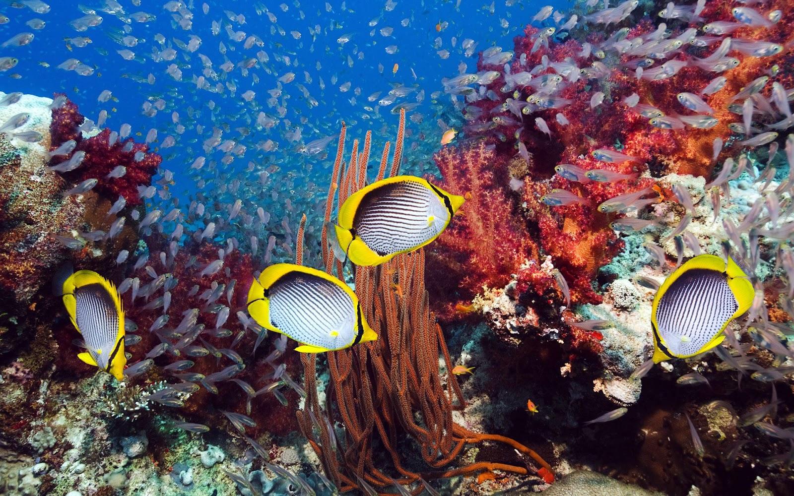 http://4.bp.blogspot.com/-WNGxIngghPg/UPHo13bK1jI/AAAAAAAACSA/GwPnh2dNkEw/s1600/fishes-pictures-3D.jpg
