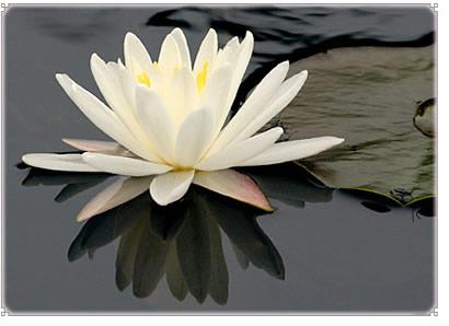 oliemassage århus lotus thai massage frederiksberg