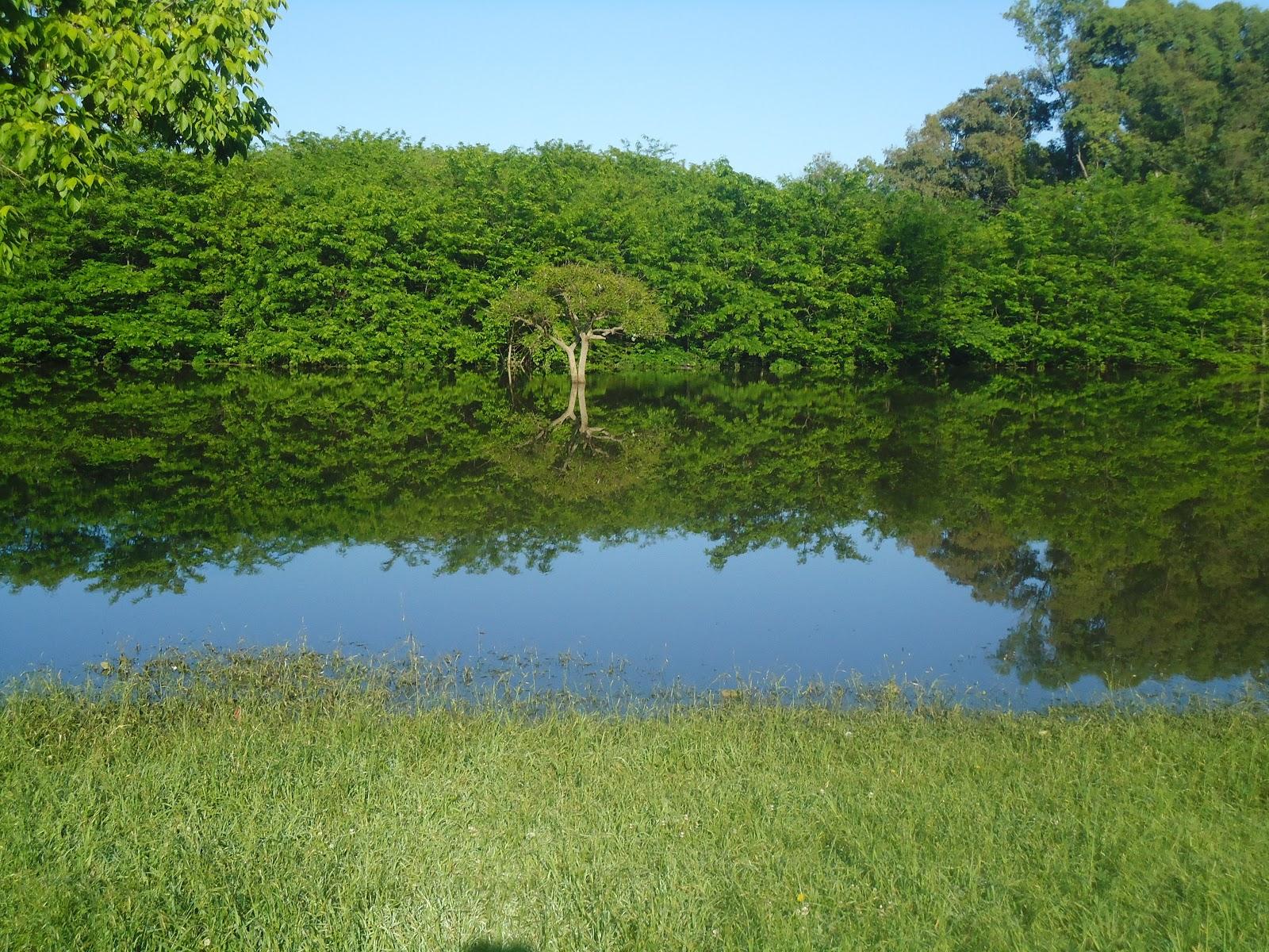 El ureo espantajo el estanque de agua quieta for Estanque de agua