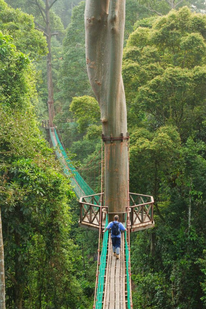 Borneo-Rainforest-Canopy-Walkway
