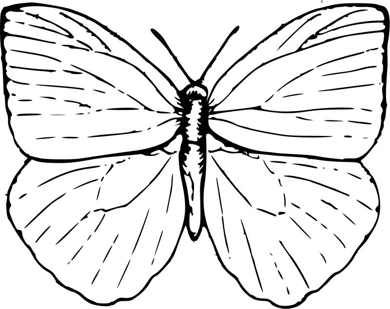 Gemütlich Malvorlagen Schmetterling Ebene Zeitgenössisch ...