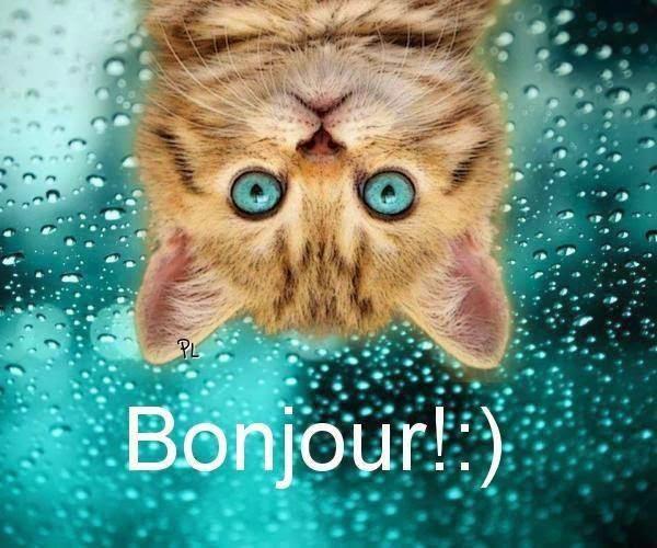 Relativ Message de bonjour drôle | Amourissima - Mots d'amour -SMS d'amour UE36