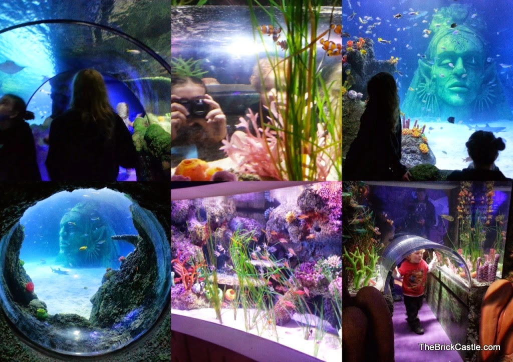 Collage of images SeaLife Manchester Trafford Centre