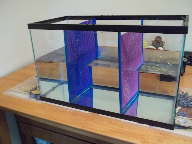 Voice 4 bettas diy aquarium dividers for Fish tank divider
