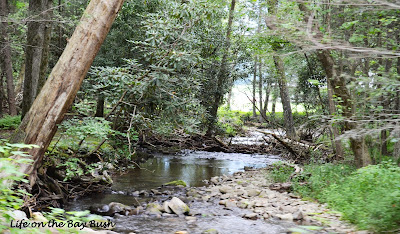 Cades Cove stream