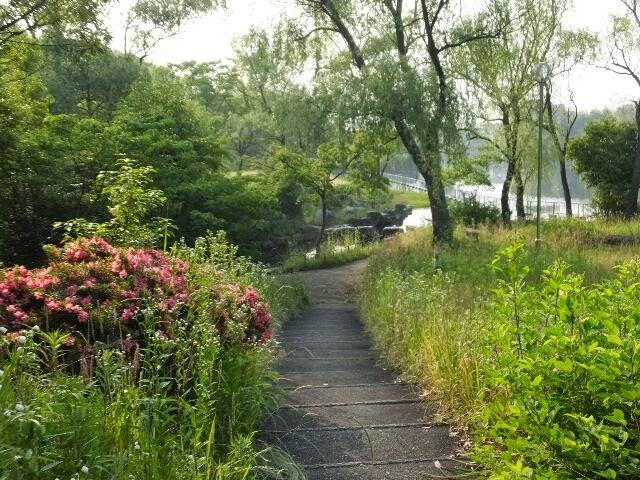 違った大蛇ヶ池の風景をみた。