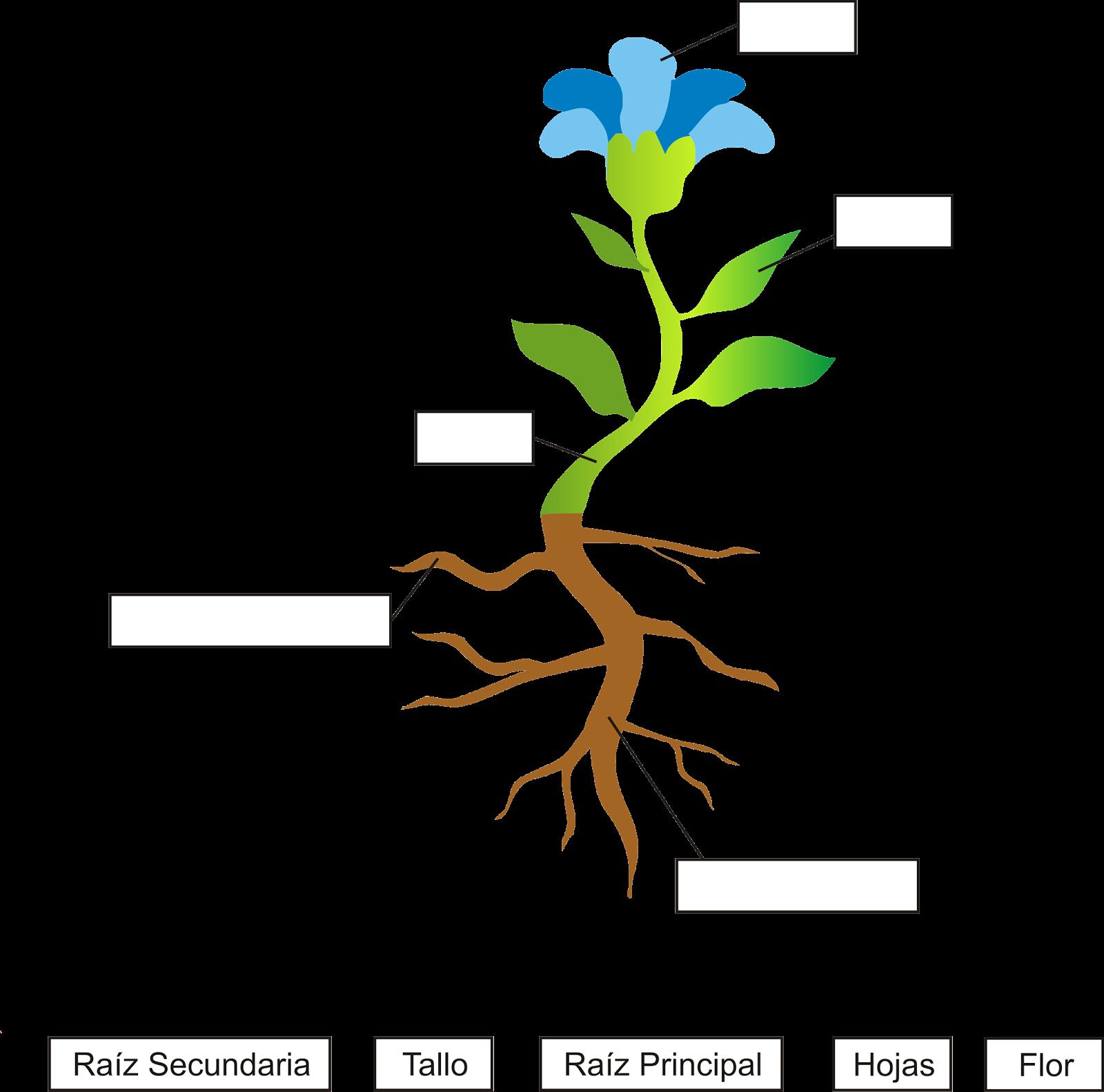Partes de la planta para ni os taringa - Cosas sobre las plantas ...