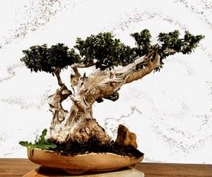 """<img src=""""bonsai13.jpg"""" alt=""""foto bonsai"""">"""