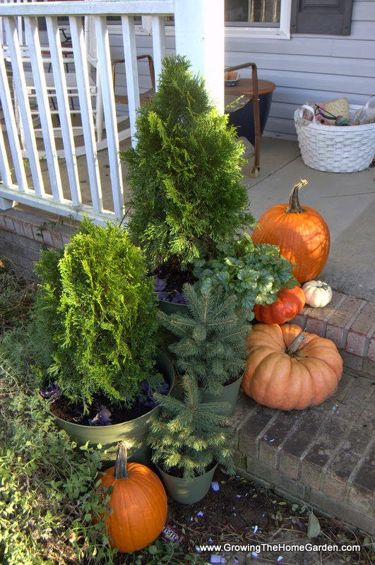 live plants for fall decorating