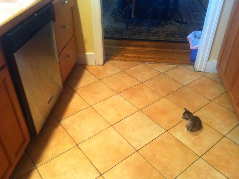 Funny cats - part 88 (40 pics + 10 gifs), kitten stares at a dishwasher