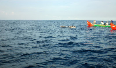 Pesona Keindahan Teluk Kiluan, Teluk Kiluan Lampung Selatan, Lampung, Bandar Lampung, Teluk Kiluan, jelajah