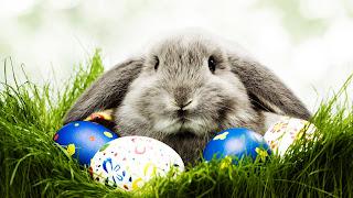 Grass Rabbit Egg Festival HD Wallpaper