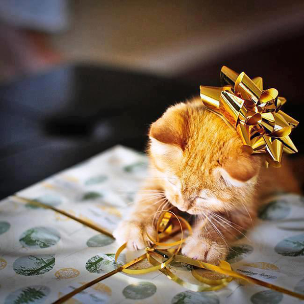more christmas animal pictures cute and fun christmas