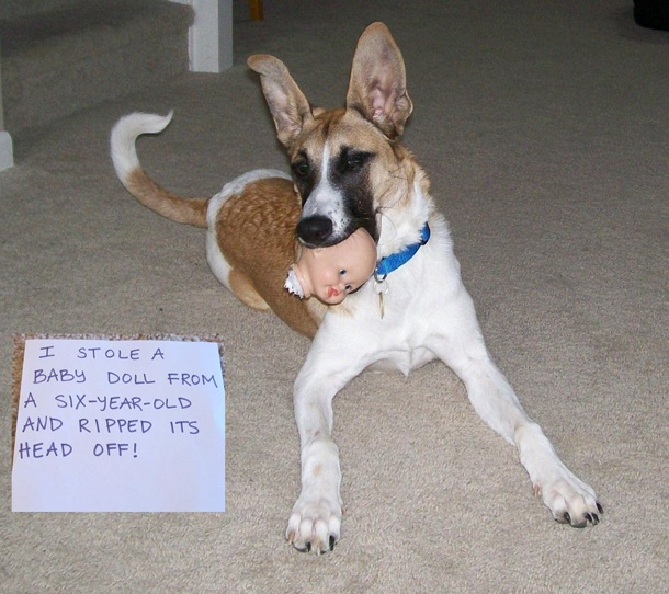 Funny dog shaming, funny dog pictures, funny dogs, dog shaming