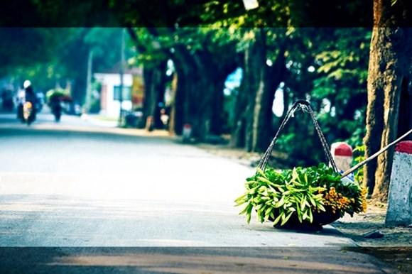 Hình ảnh hoa đẹp - Hoa loa kèn 12
