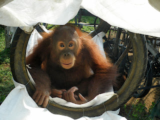 Sindi enjoying her hammock