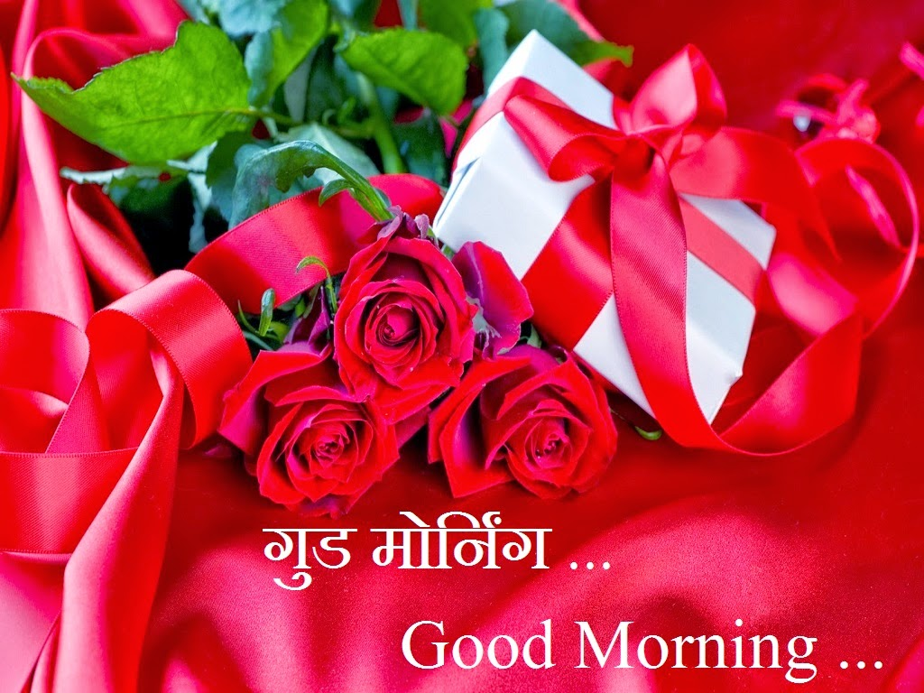 Good Morning Roses Download : Good morning red rose wallpaper download many hd