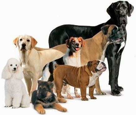 Cute puppy and dog different types of cute dogs for Types of dogs with photos