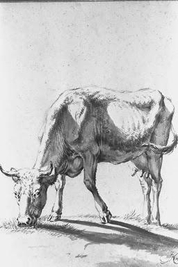 Vachement belles oeuvres de vaches de jan kobell - Vache normande dessin ...