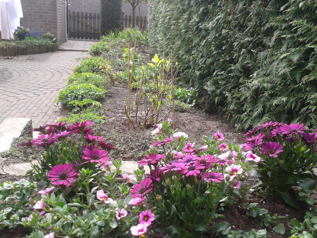 Huis tuin en mama lente in de tuin april for Huis in de tuin