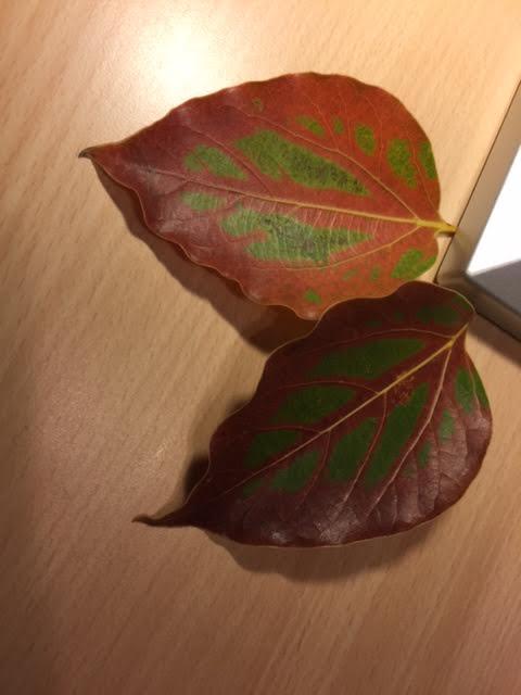 Vackra löv