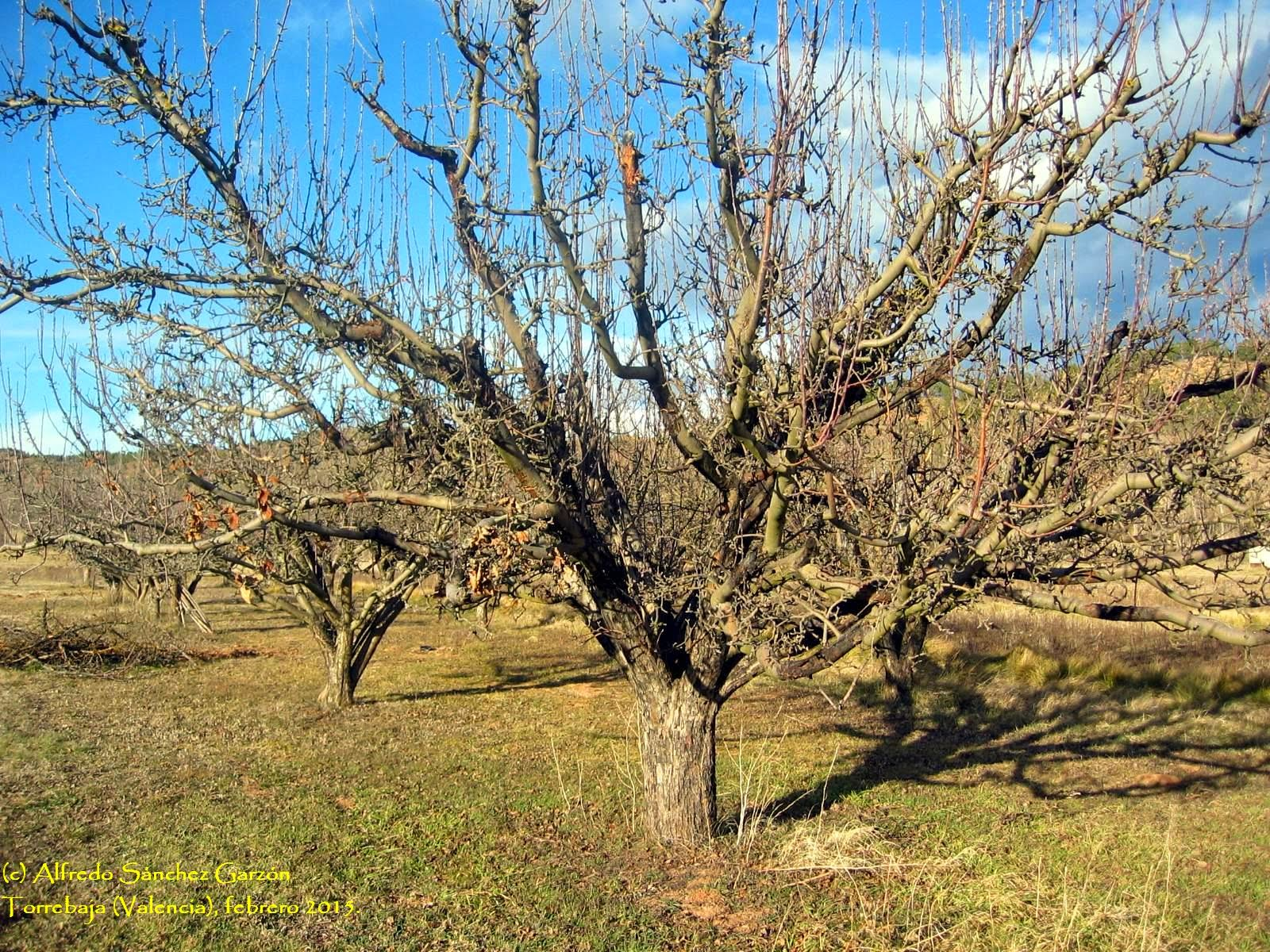torrebaja-manzanos-esperiegos