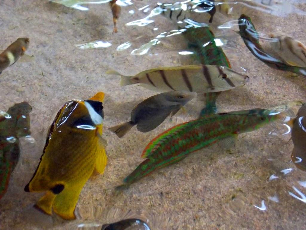 Ikan Pantai Kukup