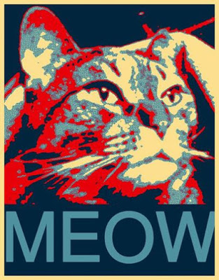 Cat Enters Race To Be US Democratic President, Yes Really