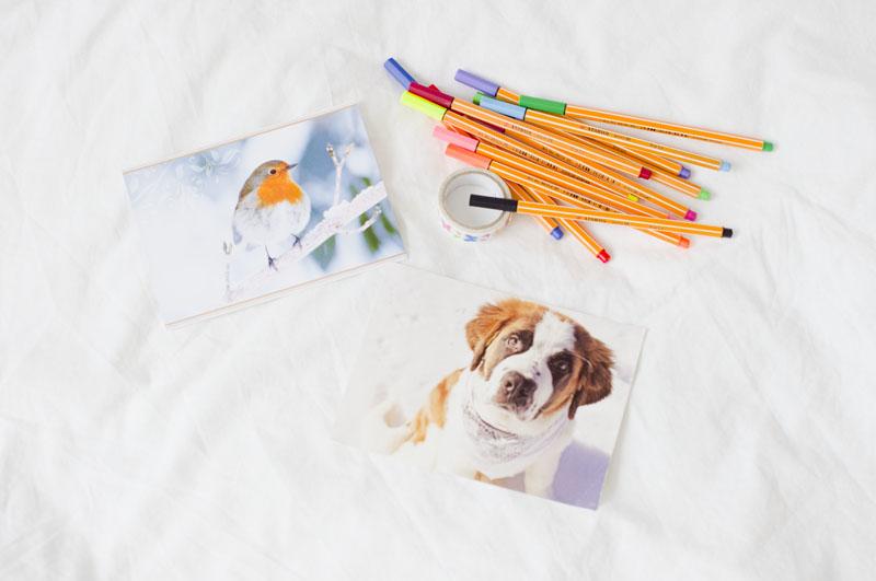 pocztówki,pies,ptak, postcrossing, Niemcy, Holandia