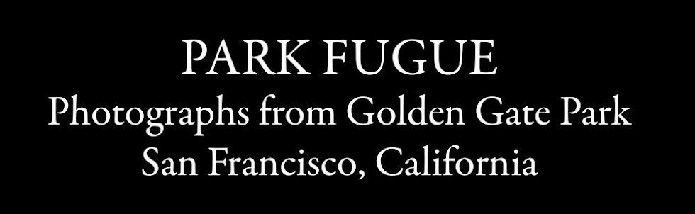 Park Fugue:  Photographs from Golden Gate Park