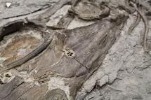 Finding Fossils. Scenes Drumheller' Dino