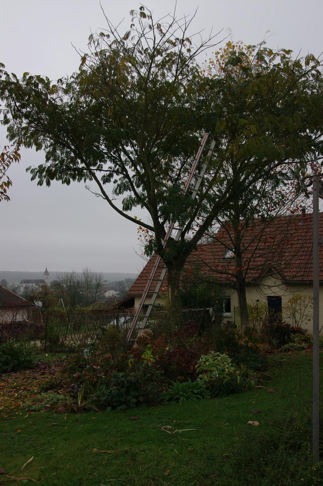 Le jardin boultois novembre 2011 - Comment tailler un mirabellier ...