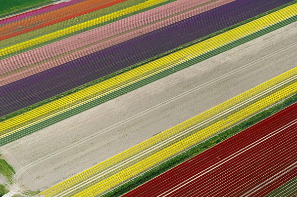 Netherlands Tulip Fields From Above