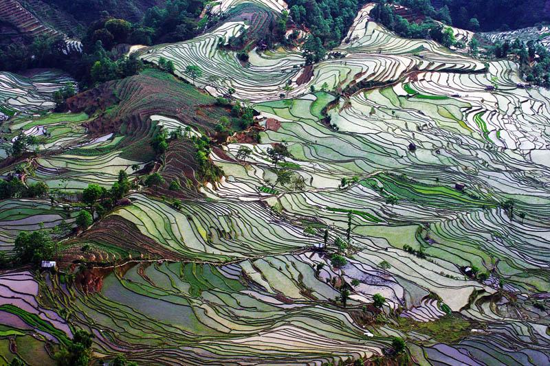 Honghe China  city photos gallery : bensozia: Honghe Hani Rice Terraces, China