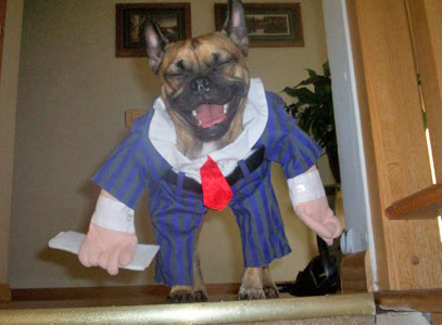 Funny Picture Clip Very Cool Funny Dog Halloween Picture
