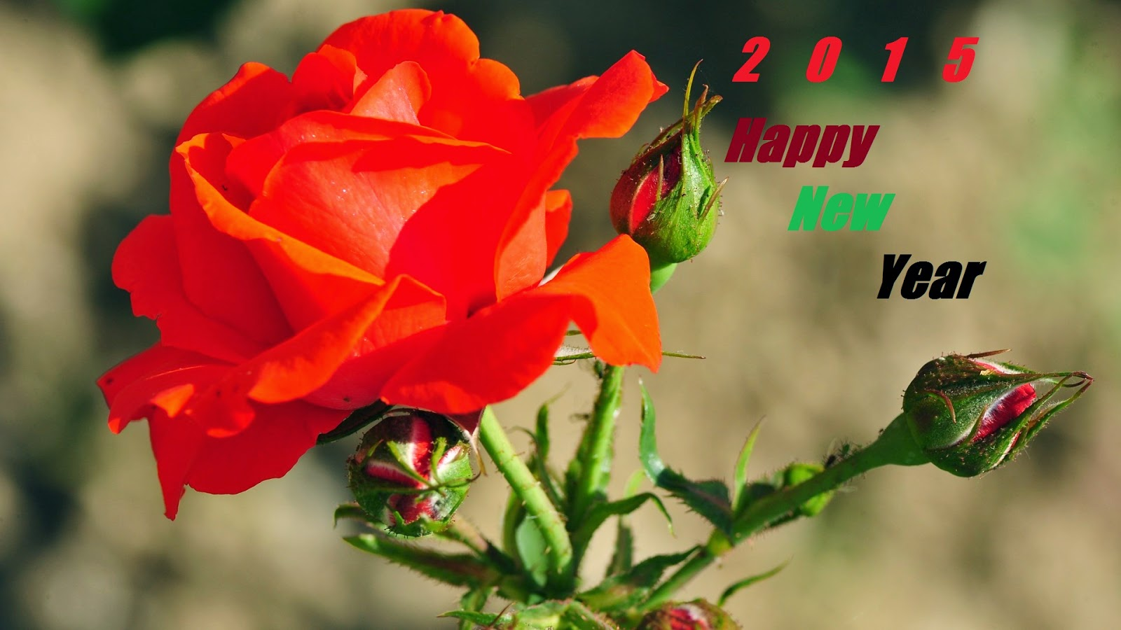 happy new year greeting nice rose flowers wishes