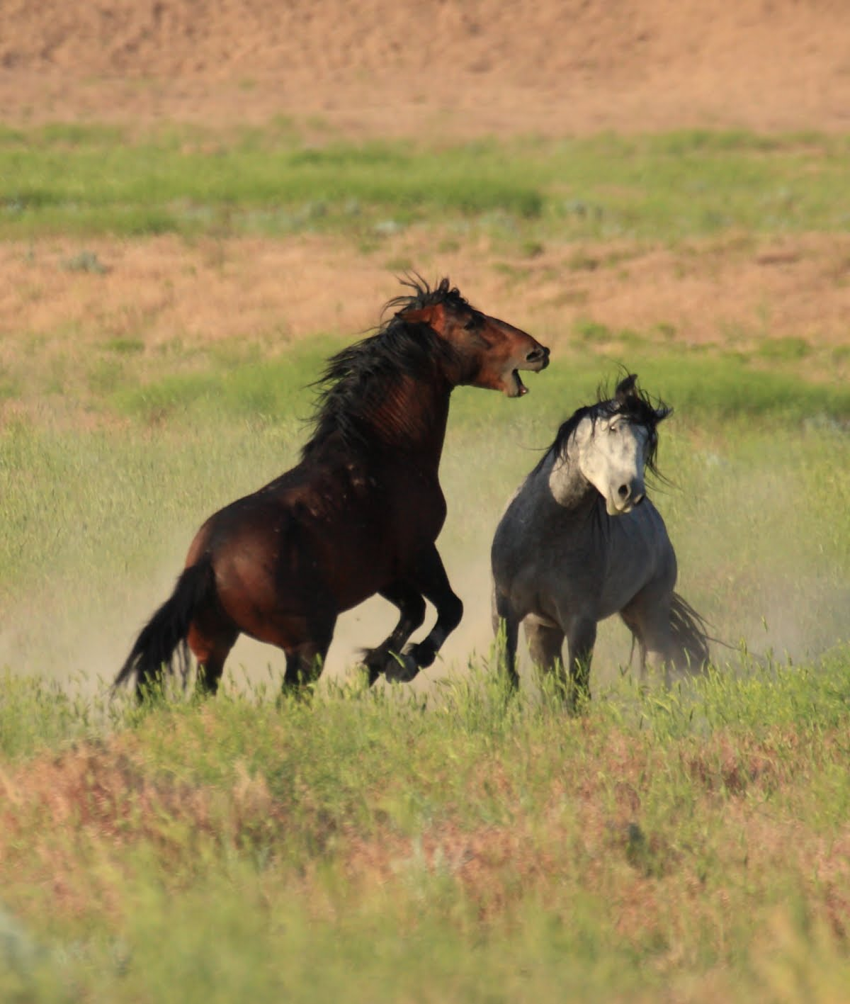 wild horse christian personals Wild horse dating: browse wild horse, co singles & personals find a date in the rocky centennial state of colorado are you single and looking for love in colorado.