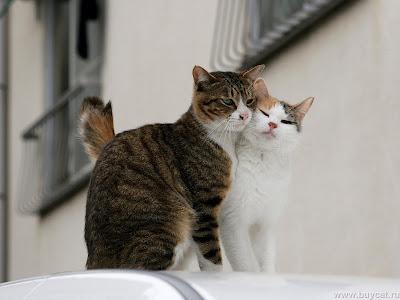 funny cat-9
