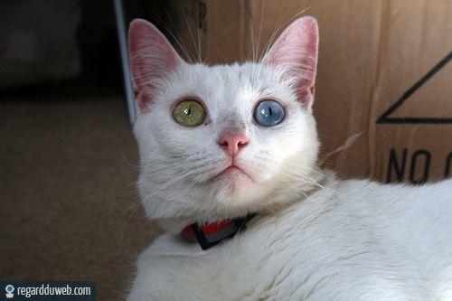 Images droles et étonnantes Animal - Chat v75 - Des milliers de photos drôles et insolites