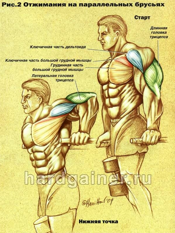 Боли и судороги в икроножных мышцах недостаток витамина в