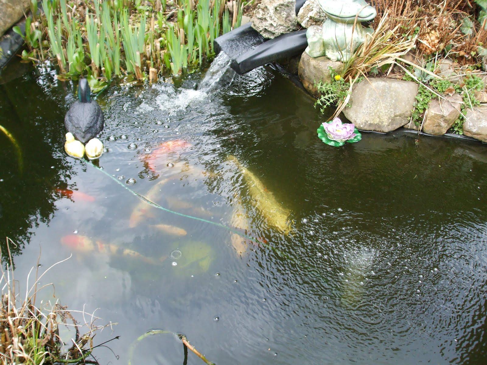 Biggi 39 s erster test blog blumen garten parade for Goldfische teich winter