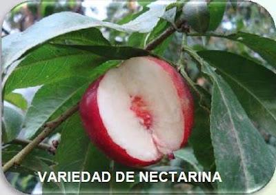 injertos de frutales