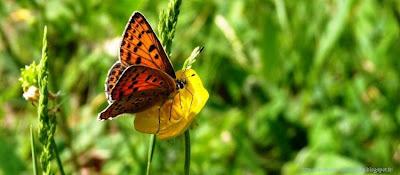 Couverture facebook Belle papillon